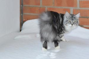 Eine Sprotte im Schnee