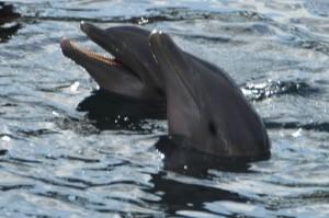 Flipper und Kollege